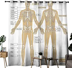 Human Anatomy Simple Curtain Diagram of Human Skeleton System with Titled Main Parts of Body Joints Picture Noise Reducing W108 x L84 White Tan