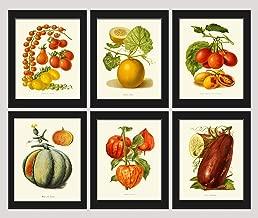 Best eggplant botanical illustration Reviews
