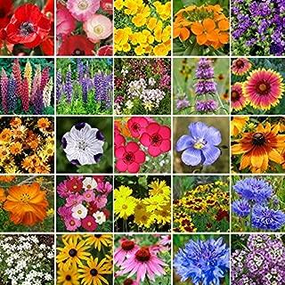 Southeast Wildflower Seed Mix- 1/4 Pound