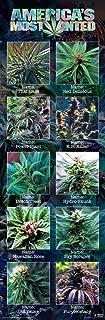 Culturenik Americas Most Wanted Weed Marijuana Novelty Drug Smoking Humor Print (Unframed 12x36 Poster)