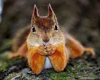 Squirrels - Squirrel 8 x 10 * 8x10 Photo Picture Image #21