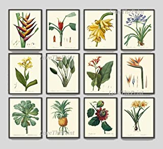 Tropical Flower Botanical Print Set of 12 Antique Beautiful Redoute Blooming Bird of Paradise Banana Plant Fruit Pineapple Passion Fruit Southern Garden Nature Home Room Decor Wall Art Unframed