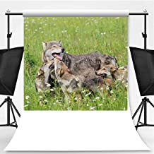 Mother Wolf with Three Cubs on Grassy Meadow Theme Backdrop Backdrop Background for Photography,093939,8.2x8.2ft