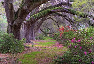Best garden scene photo Reviews