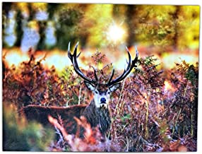 BANBERRY DESIGNS Pictures of Deer – LED Lighted Print with White Tail Buck in a Autumn Forest – Wildlife Wall Art with Lights