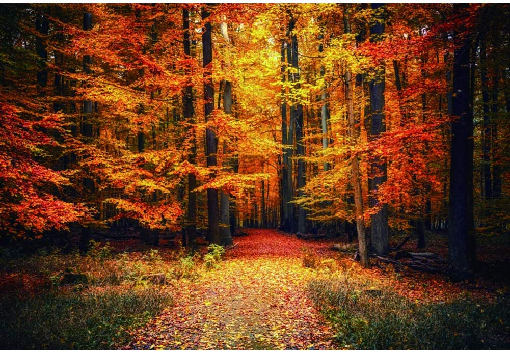 Renaiss 12x10ft Max 63% OFF Autumn Scenery Backdrop Fallen Fall Path Max 84% OFF Forest