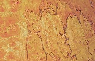 "Pimento Pepperwood Burl wood veneer 18"" x 26"" raw no backing 1/42""-1/64"" thick"