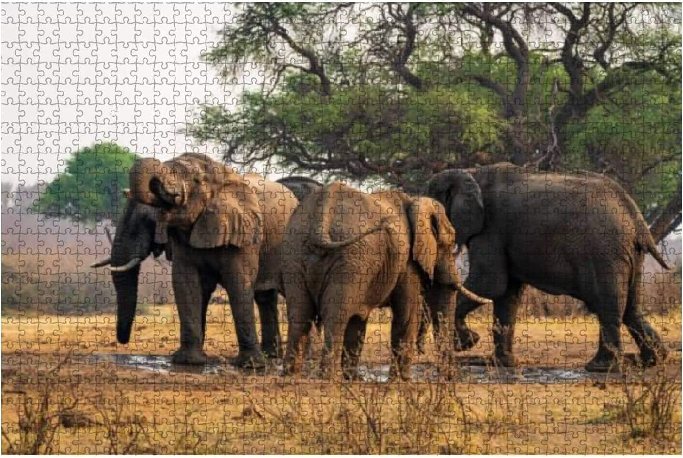 1000 Pieces-Jungle with Old Luxury goods Tree Birds Elephant Blue and Clou on Max 60% OFF