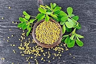 Fenugreek Herb Seeds, 200+ Premium Heirloom Seeds, (Isla's Garden Seeds), Non GMO, 85% Germination, Highest Quality!