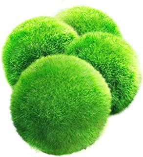4 LUFFY Giant Marimo Moss Balls - Aesthetically Beautiful & Create Healthy Environment - Eco-Friendly, Low Maintenance & Curbs Algae Growth - Shrimps & Snails Love Them