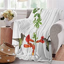 SONGDAYONE Multi-Color Blanket Hummingbirds Travel Essential Two Hummingbirds Sipping Nectar from a Trumpet Vine Blossoms Summertime W60 x L80 Red Black Green