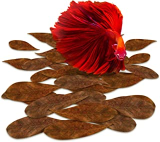 SunGrow Catappa Indian Almond Leaves for Betta, Promotes Breeding, Lowers Your Tank's pH, Decreases Stress in Fish, Shrimp, and Frogs, Improves Habitat, Unique Decoration