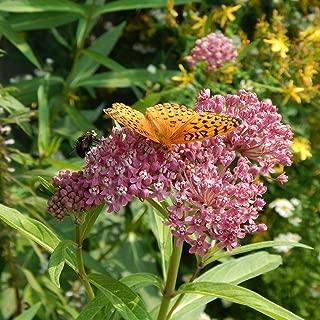 Rose Milkweed pink butterfly weed monarch swamp 50 seed