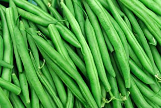 1 oz Blue Lake Bean pickling freezing THE bean commonly used for canning Non-GMO Seeds By MySeeds.Co BLUE LAKE 274 Bush Bean seeds 80+ Seeds 1 oz