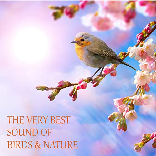 The Very Best Sound Of Birds And Nature (With Rain, Forest
