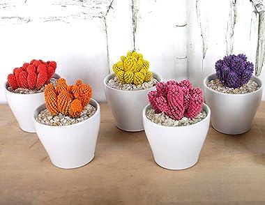 Costa Farms, Premium Live IndoorDesert Gems Purple Cacti, Tabletop Plant, White Gloss Euro Ceramic Decorator Pot,Shipped Fr