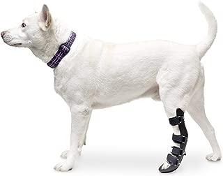 dog foot brace for knuckling