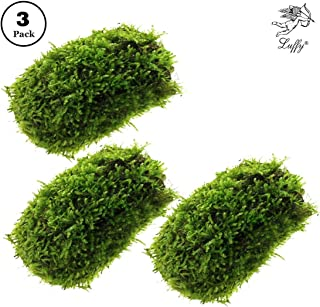Luffy Coco Mini Moss, Hiding & Breeding Spot, Aquatic Play Toy, Fish Moves Around or Swim Under, Builds a Beautiful Aquascape, Easy Care, Hardy, and Long-Lasting Plant