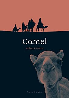 camel farm for sale