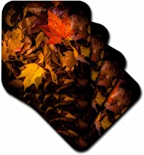 3dRose CST_110777_2 Fall Leaves on Forest Floor Soft Coasters, Set of 8