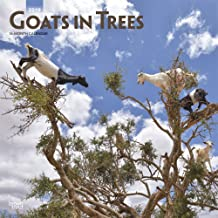 Goats in Trees 2019 12 x 12 Inch Monthly Square Wall Calendar, Domestic Funny Farm Animals (Multilingual Edition)