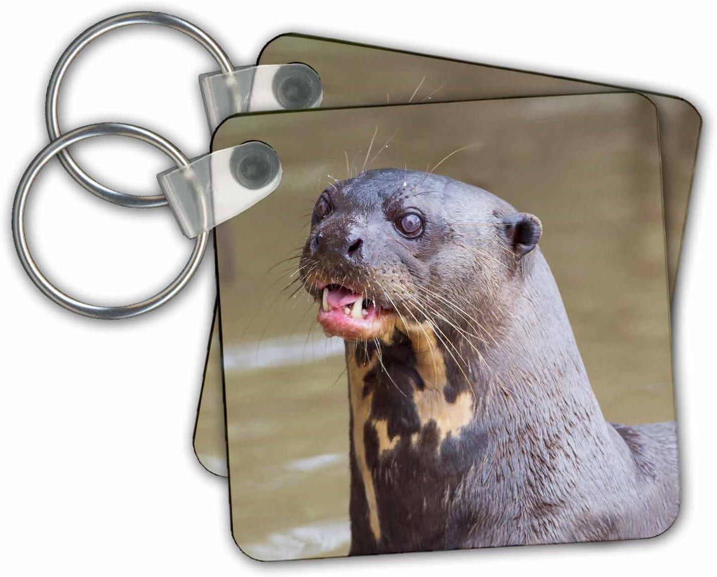 3dRose Key Chains Brazil, Mato Grosso, The Pantanal. Giant River Otter Portrait, Set of 2, 2.25 x 2.25