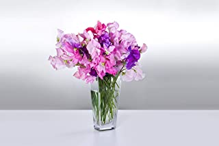 Sweet Pea Everlasting Mixed Color - Perennial Seeds