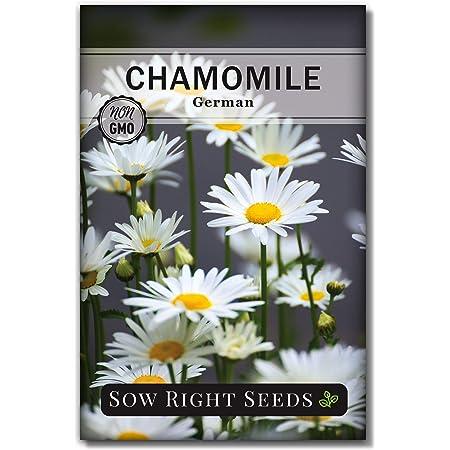 German Chamomile 100  Seeds