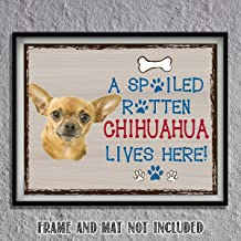 Chihuahua-Dog Poster Print-10 x 8