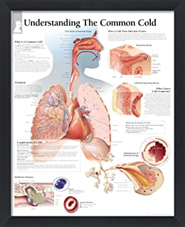 Sponsored Ad - wallsthatspeak Understanding The Common Cold Framed Medical Educational Informational Poster Diagram Doctor...