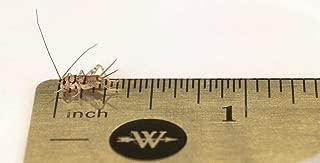 cricket feeder box