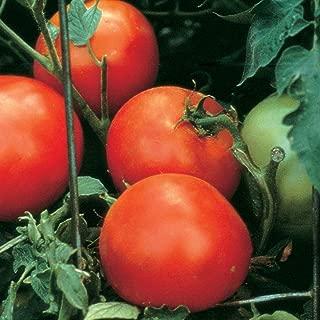 Burpee 'Celebrity' Hybrid | Slicing Red Tomato | Disease Resistant | 35 Seeds