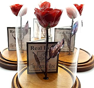 Forever Rose USA Brand - The Beauty and The Beast Rose - Enchanted Rose - This is a Real Rose! … (Red)