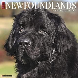 Newfoundlands 2019 Wall Calendar