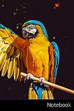 Amazon.es: Guacamayos