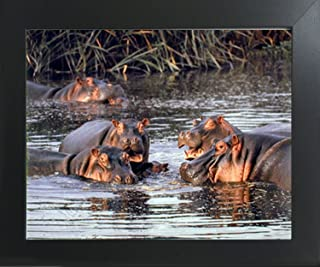American Bison I Wildlife Animal Wall Decor Mahogany Black Framed Art Picture