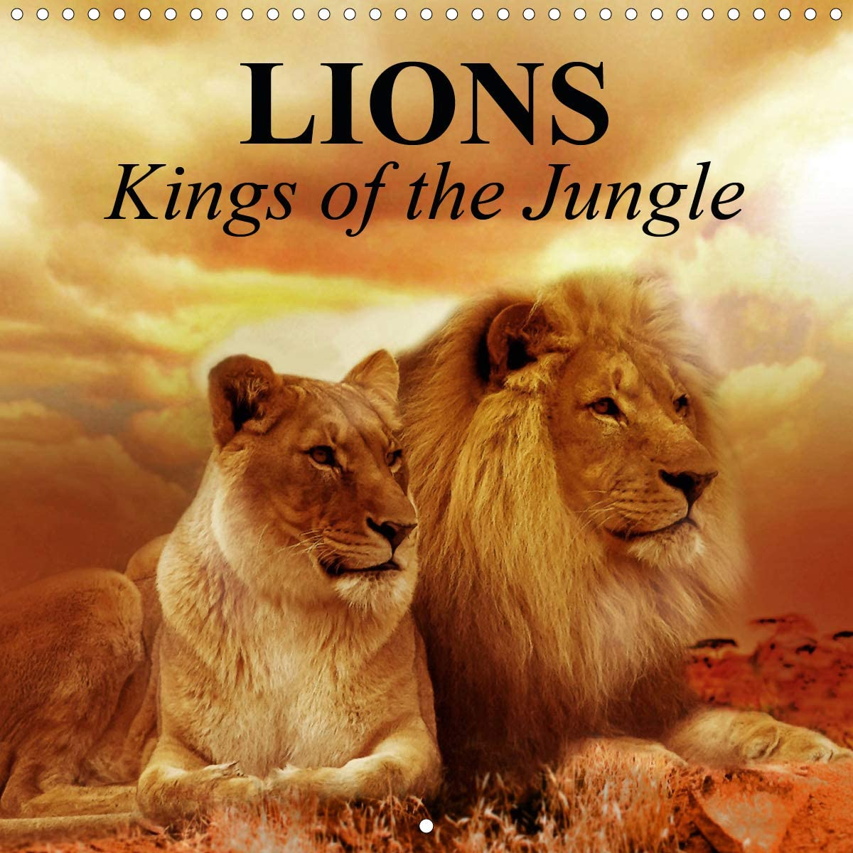 Lions 新作アイテム毎日更新 Kings of The Jungle Wall mm × 希望者のみラッピング無料 Calendar Squar 2021 300