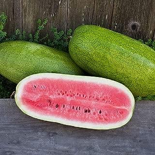 David's Garden Seeds Fruit Watermelon Ali Baba SL7602 (Red) 25 Non-GMO, Heirloom Seeds