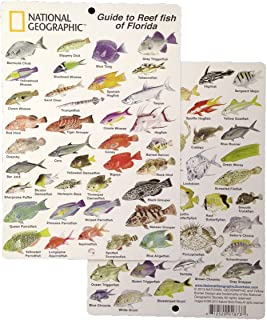 National Geographic - Guide to Reef fish of Florida - Fish ID Card (6 in by 9 in)