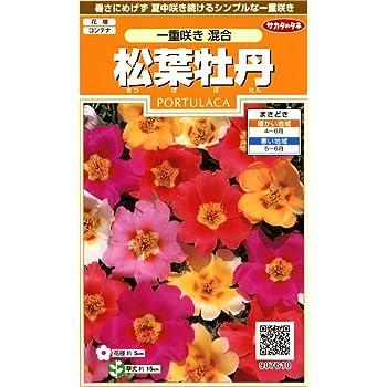 サカタのタネ 実咲花7610 松葉牡丹 一重咲き混合 00907610