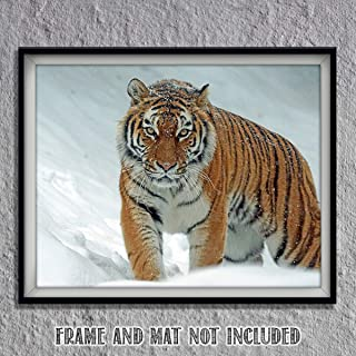 siberian tiger print