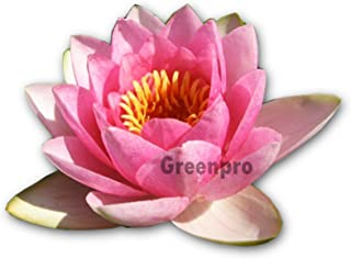 Aquarium Ornament Pink yanQxIzbiu Artificial Water Grass Lotus Leaves Fish Tortoise Tank Aquarium Plant Decor