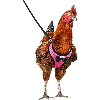 Black, X-Small Chicken Harness