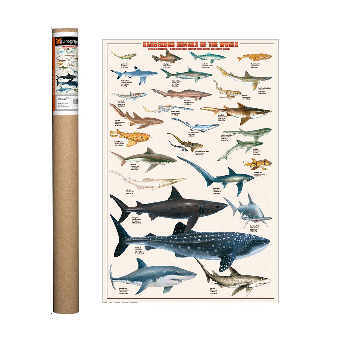 Whales Educational Poster 36 x 24in