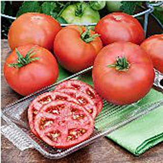 Heatmaster Tomato Seeds (25 Seed Package) Premium Gardeners Vegetable Seeds, Non GMO, 90% Germination Rates, Highest Quali...