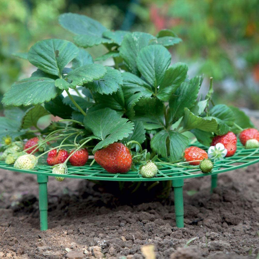 Erdbeer Halter Rankhilfe Erdbeerschutz Unterst/ützt Schutz von Erdbeeren und h/ält die Erdbeerreinigung aufrecht