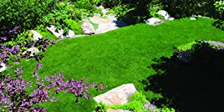 Kentucky Bluegrass Seed: Blue Ribbon Blend (1000 sq ft)