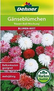 Dehner Blumen-Saatgut, Gänseblümchen Riesen-Ball-Mischung, 5er Pack 5 x 0.5 g