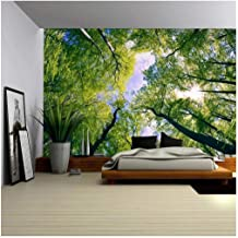wall26 - Sky View from Below a Tree Forest - Wall Mural, Removable Sticker, Home Decor - 100x144 inches