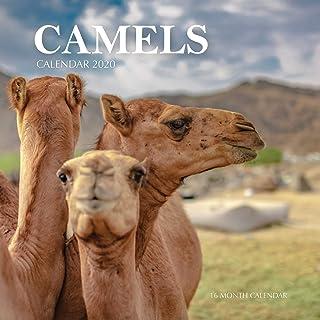 Camels Calendar 2020: 16 Month Calendar
